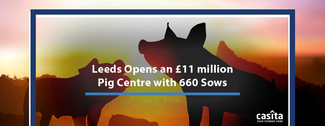Leeds Opens an £11 million Pig Centre with 660 Sows